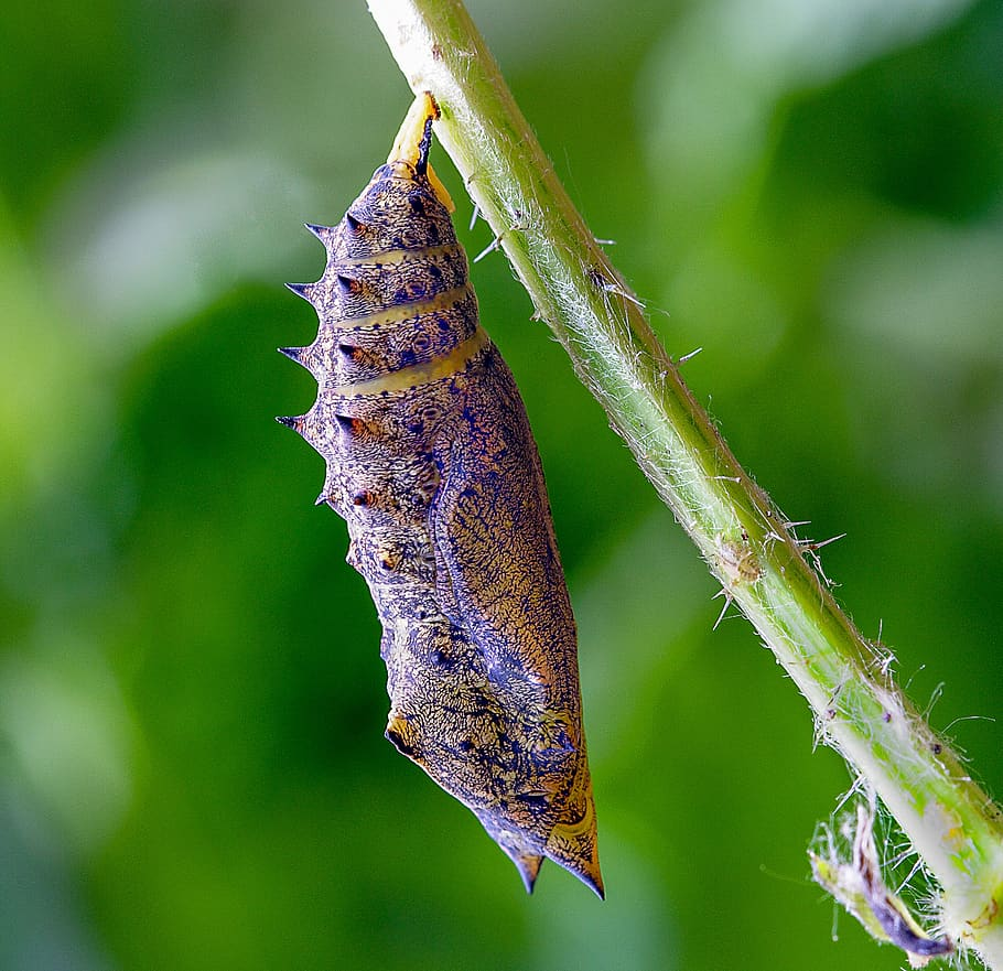 Image of a cocoon representing middle stages of transformation