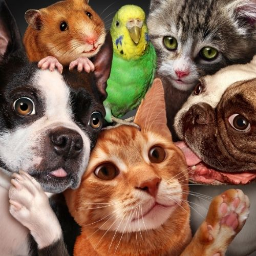 Image of pets for show and tell team building activity.