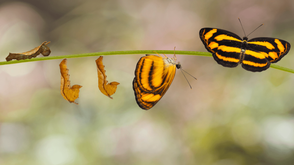 Cocoons transforming into a butterfly representing Transformational Leadership Style